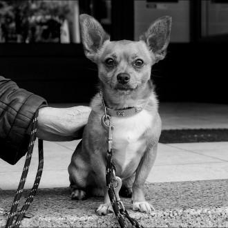 Hand und Hund
